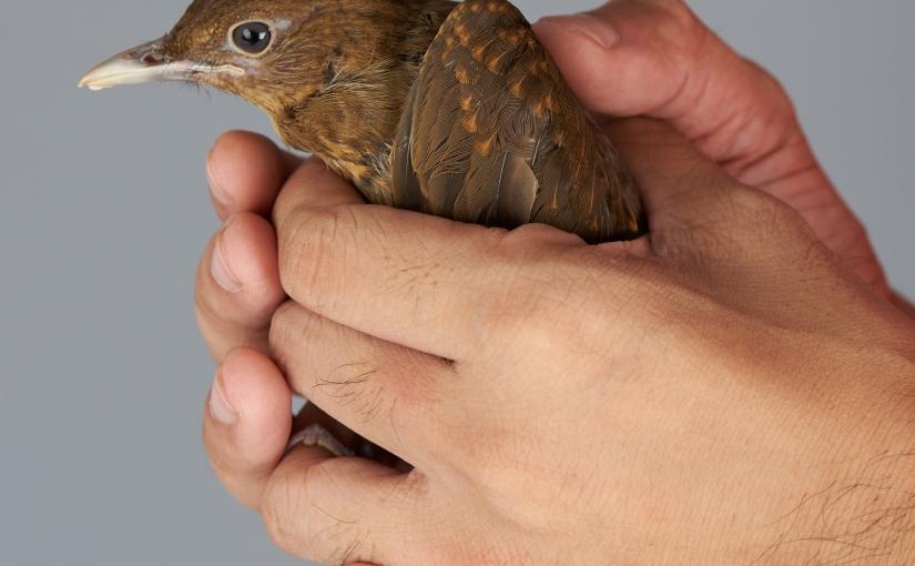 Hold Life Like aBird